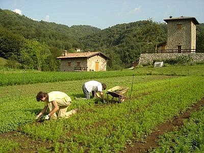 Декрет флюсси для сезонных работников на 2015 год